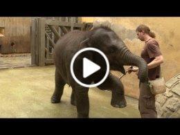 sloni-v-zoo
